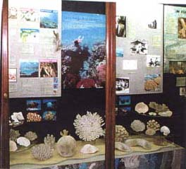 coral display case