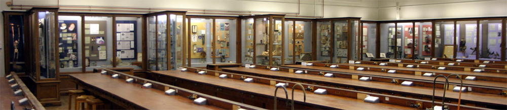 The Invertebrates Gallery
