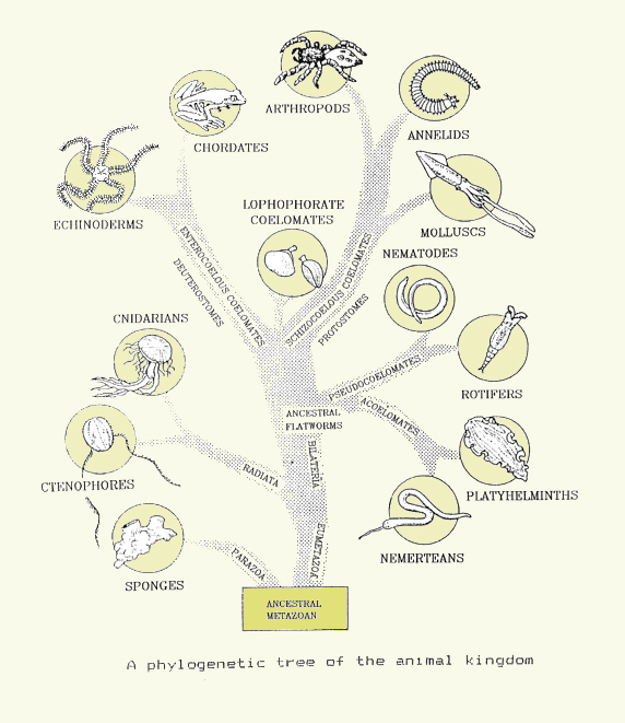 tree of life evolution. on the tree of life.
