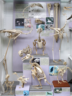 Bird Skeletons and Skulls